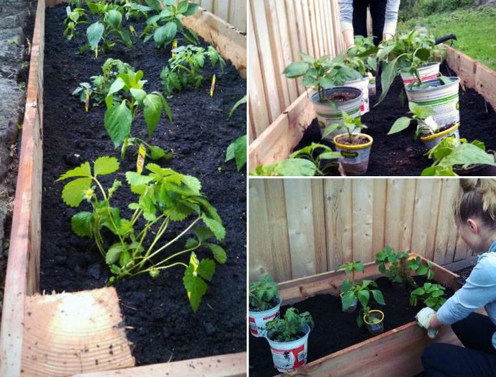 Gardening Tips Pt I: DIY Raised Beds 99091 thumb