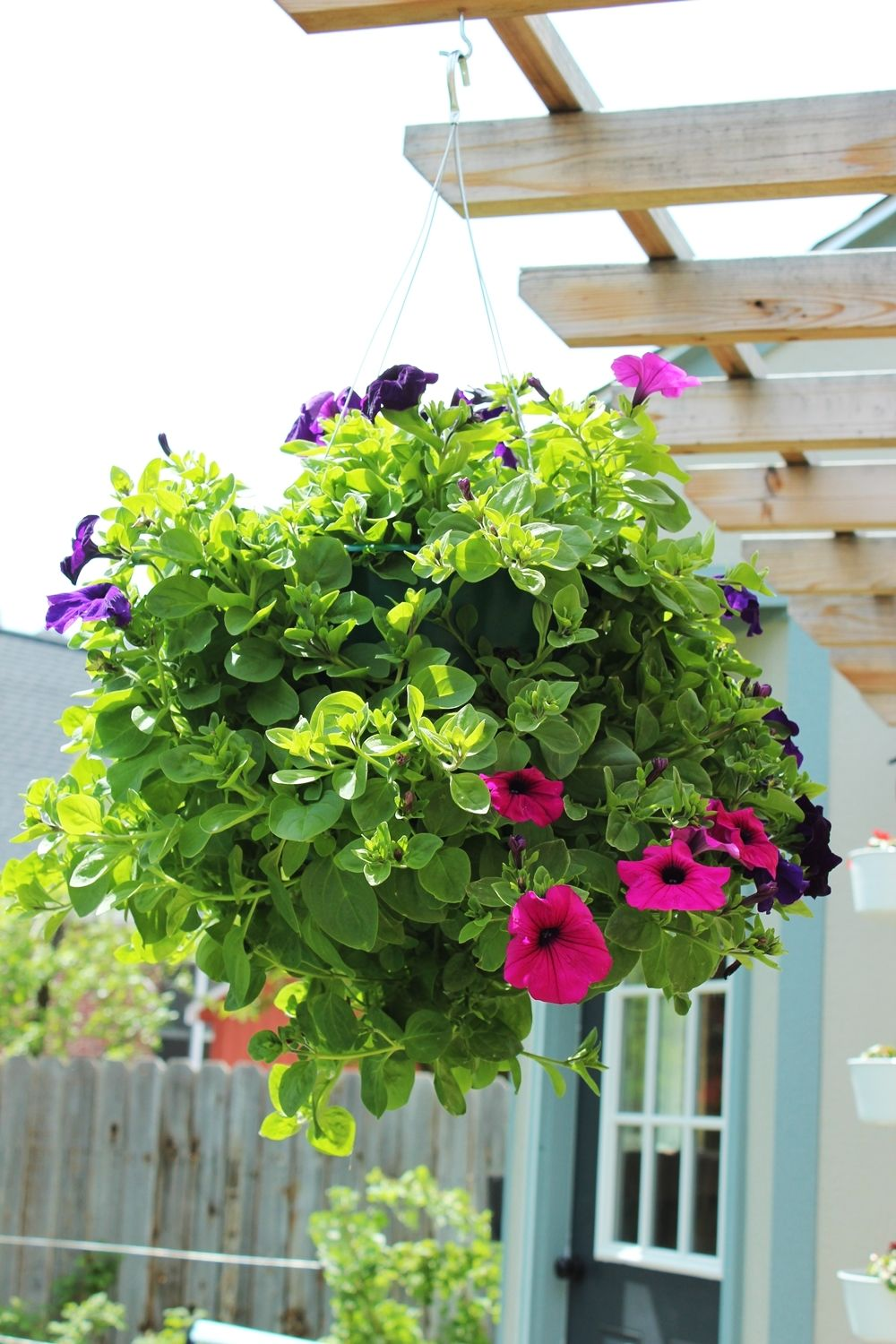How to Plant a Professional-Looking Hanging Flower Basket ...